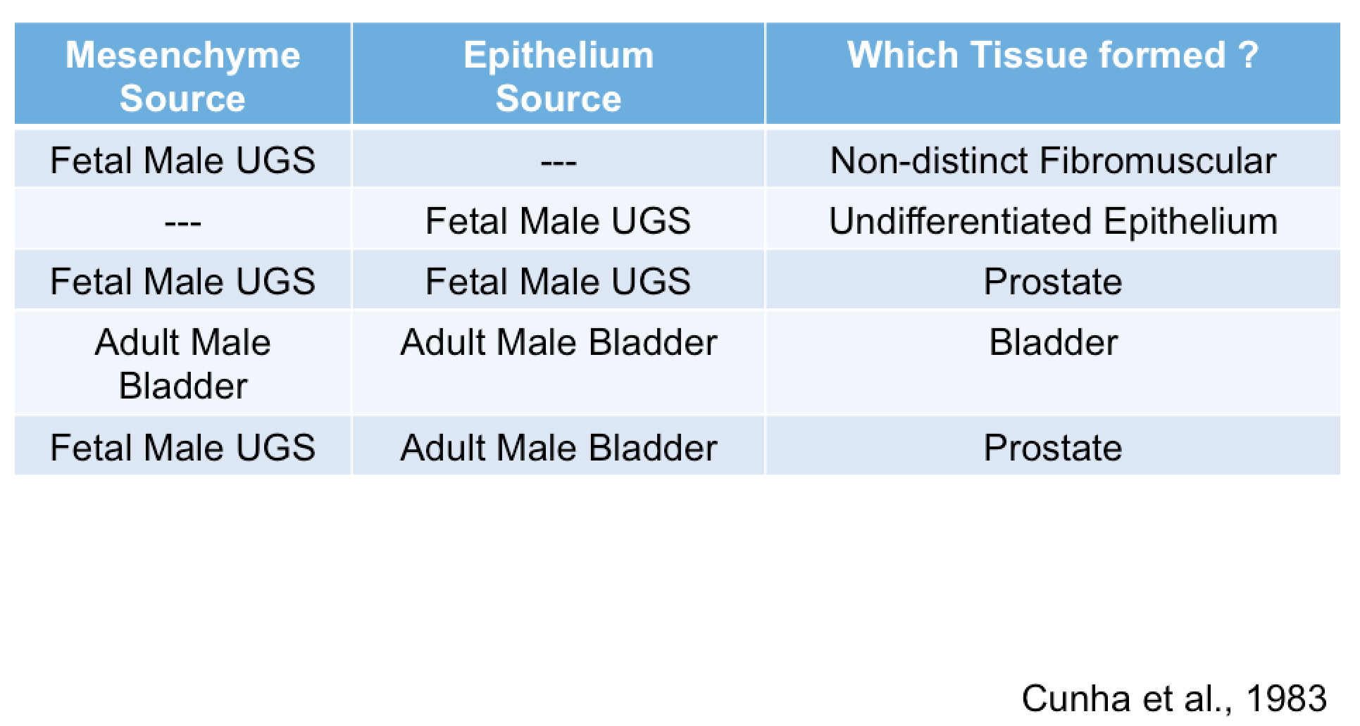 Table of tissue formed due to mesenchyme or epithelial source